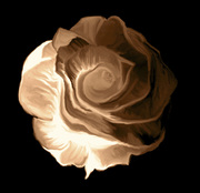 Rose fn sepia