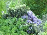 Quinta do Boico-Forest Garden