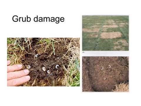 Jon Hill Turf   How to care a lawn and its turf