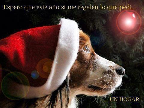 Carta a Santa Claus; deseo de un hogar