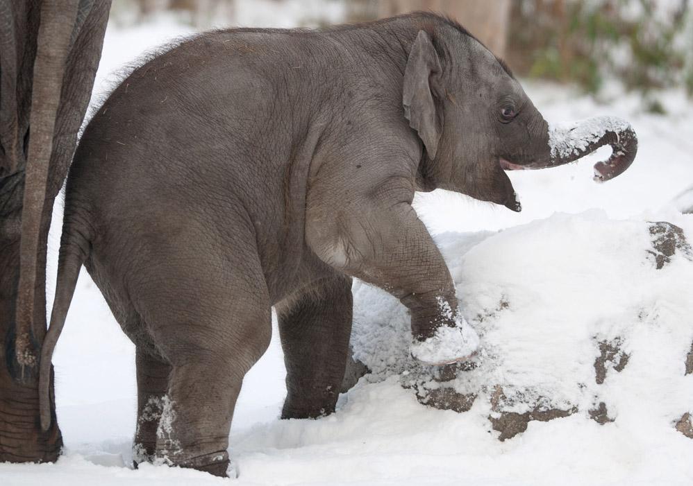 15 animales disfrutando de la nieve
