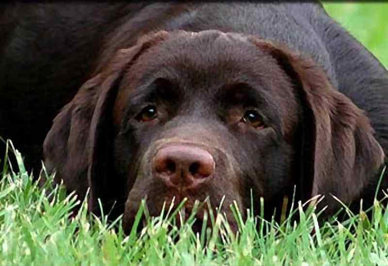 Carta a mi perro: Me salvaste la vida