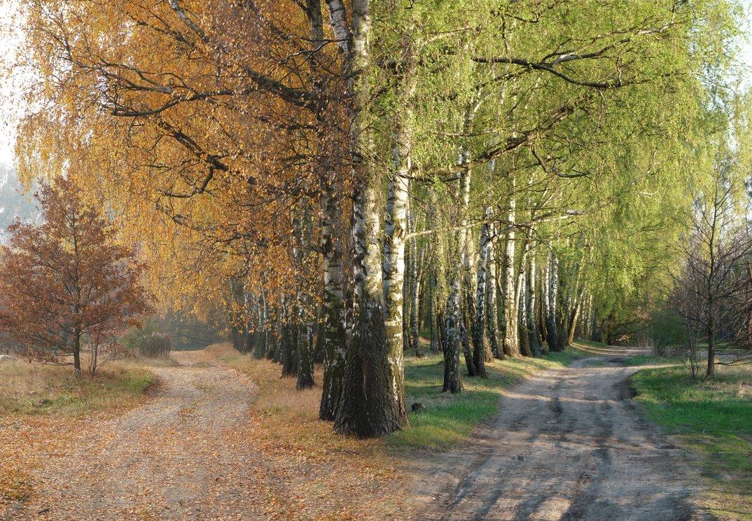 Estos animales disfrutando del otoño y la primavera te robaran el corazón