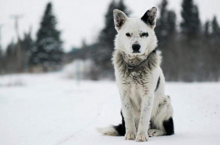 Carta a mi perro, a mi fiel compañero