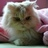 Moses Cat