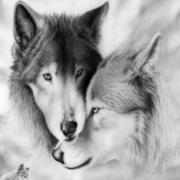 Bea Wolf