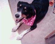 Sadie Girl