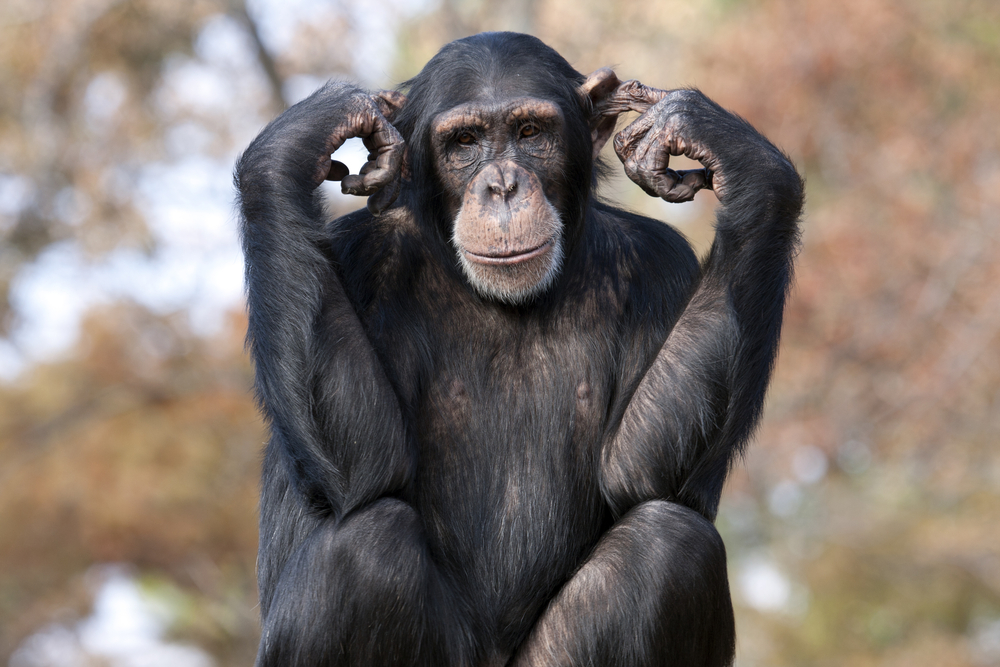 Are you communicating and presenting like a chimp?
