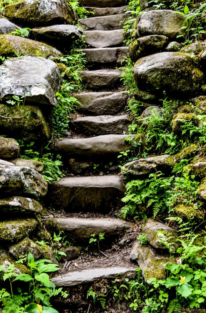 Steps in Greenbrier, 4-25-19