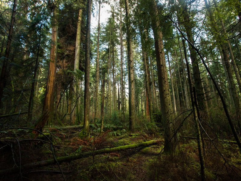 Smithsonian: Do Trees Talk to Each Other?