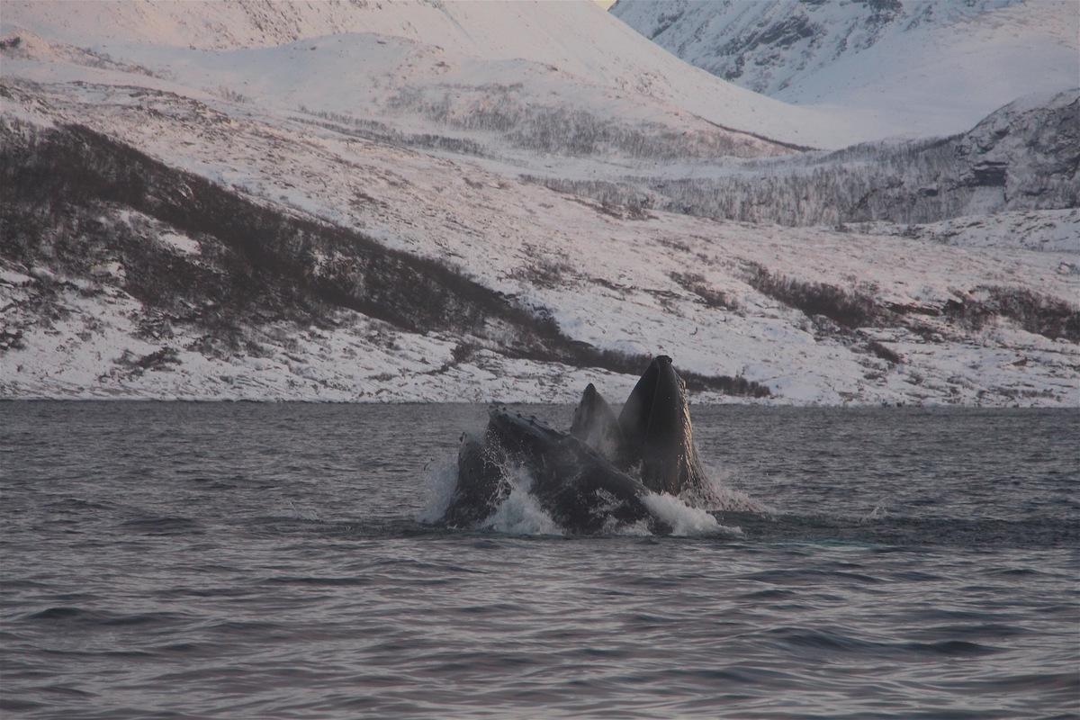 Reefz Ledenreis: Tromsø