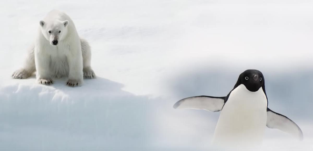 Bevroren beeld