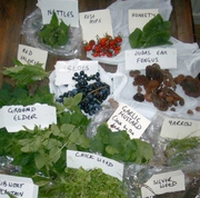 Winter Foraging Walk - Winter Greens