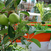 Edible Open Gardens Day: Venues in Haringey