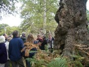 Tree Warden Event THIS Saturday at 10am