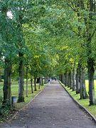 Beginners' Tree Walk