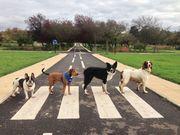 Dog Club Gathering