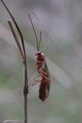 Insect Talk by Dan Hackett