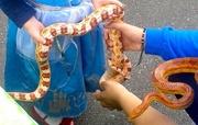 Mini Beasts & Reptile Experience at Tottenham Green Market