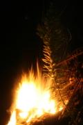The bonfire begins