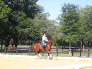 Dressage Clinic at Whispering Dream with Wolfgang Kutting