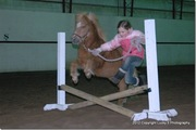 Winter Horse Show Series #3
