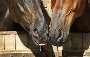 Equine Biosecurity - Canada's standard