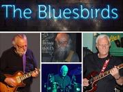 BLUESBIRDS...blues-rock.