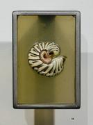 Armadilldium vulgare