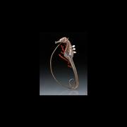 A Seahorse-2