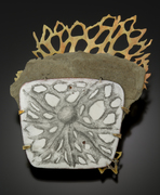 cracked & stained series:  haeckel's metaphor
