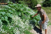 Year-round Veggies - A Planting Guide for Waiheke