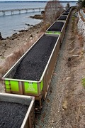 Volunteer for No Coal at Cherry Point
