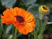 Oasis Garden plant tour and Salve Making Workshop