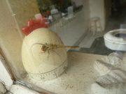 Ontmoeting met een libelle