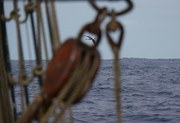 Cross Atlantic sailing voyage Santos - Cape Town