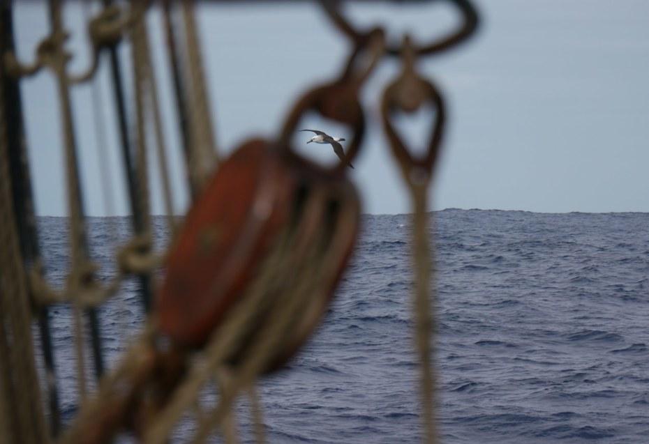 Cross Atlantic sailing voyage Santos - Cape Town