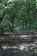 Sensing Nature Walk (Friends of Alexandra Park)