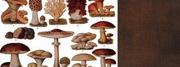 Fungus walk