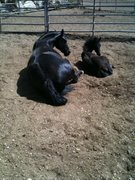 My niece's mare & foal