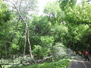 Workers cutting up damaged tree on North Branch trail