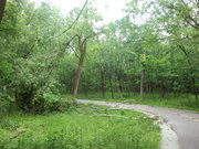 Downed tree on North Branch trail