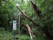 Downed tree near North Branch trail