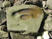 My scenery photo - Seka or kava drinking stone, Kosrae 2005