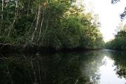 Delta del Orinoco (54)