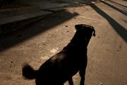 Un paseo con Bongo