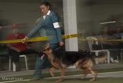 Exposición Canina