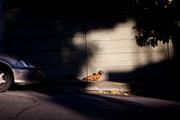 Día 6 - Un perro salchicha - Reinaldo Odreman