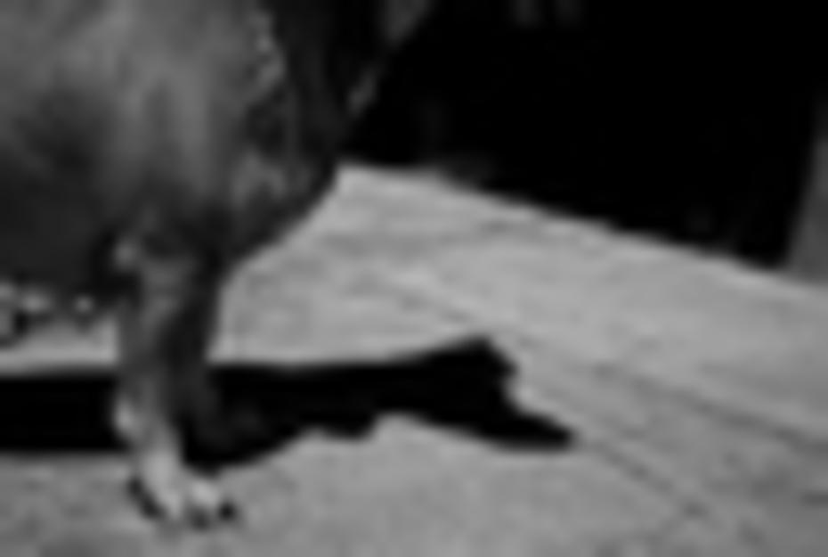 Día 6 Perro Salchicha