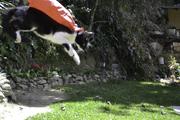 Dia 1 / mamifero volador